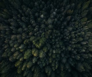 Top down view of a forest for internal impact of a website redesign blog post